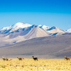 travel guide bolivia front