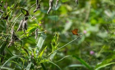 cat tien national park butterfly