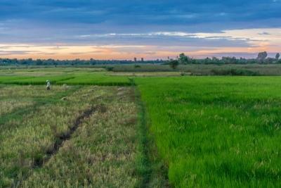 cambodia kratie koh trong rice fields
