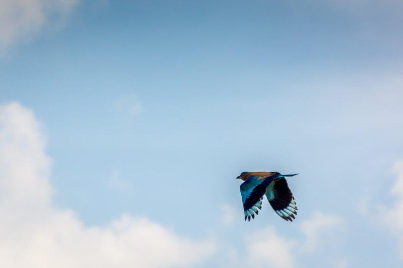 sri lanka jaffna tropical bird
