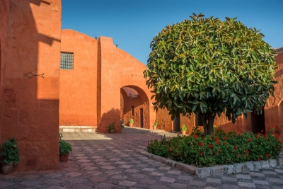 tree monasterio arequipa peru