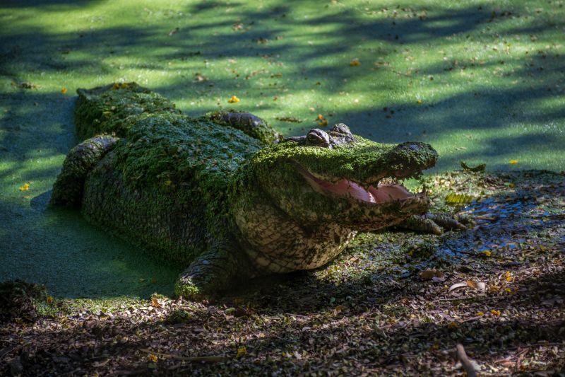 australia broome douglas crocodile farm