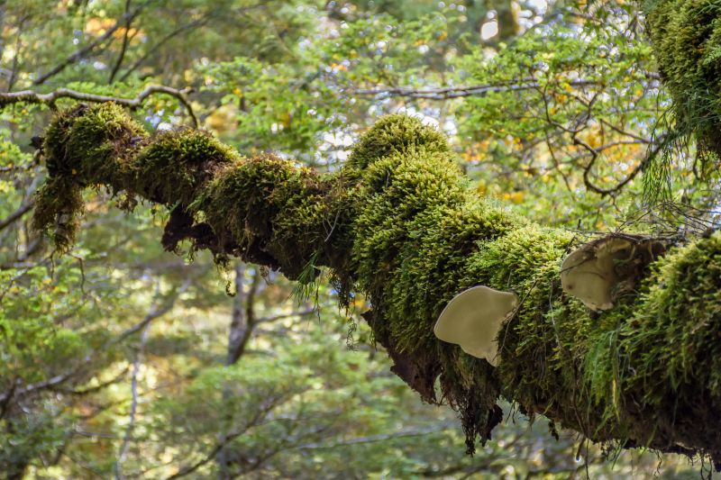 new zealand haast pass tree forest