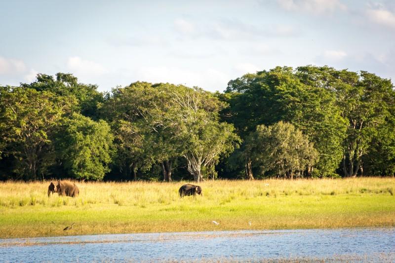 elephants uluwawe national park