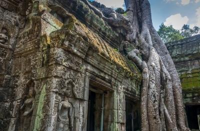 angkor wat ruin with tree