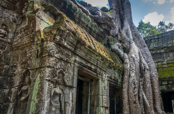 angkor wat ruin with tree