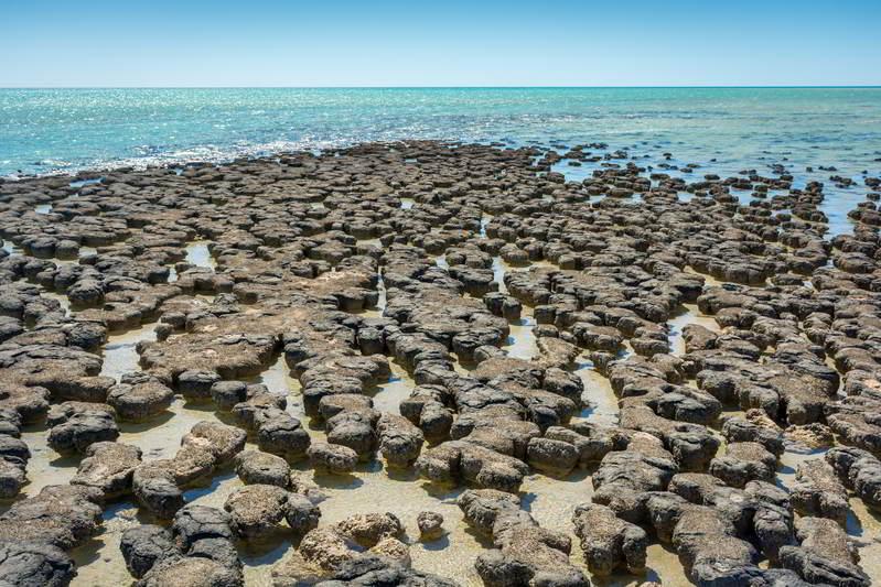 western australia stromatolites hamelin
